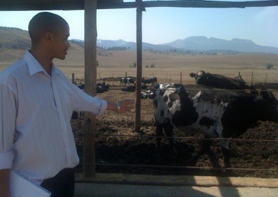 Hebert counting cows at a stock count